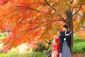 桜・紅葉を撮影するなら...『じゅん菜池』