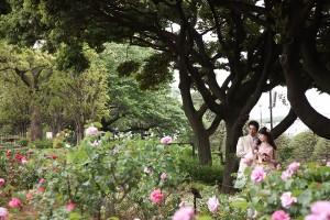バラが咲き誇る・港の見える丘公園