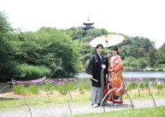 三溪園では和装に映える花菖蒲が見頃です