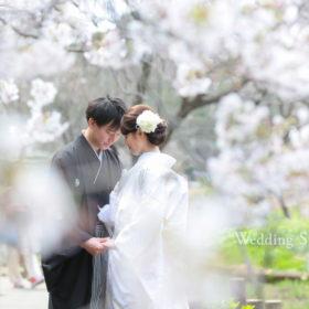 桜に囲まれているようなシーンが撮影出来る和装ロケーション